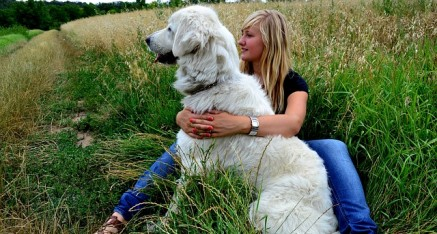 Don't Forget Fido when Estate Planning: Including Your Pet in Estate Planning